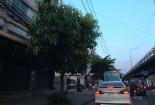 เห็นธนาคารไทยพาณิชย์อยู่ลิบๆทางซ้ายมือละครับ